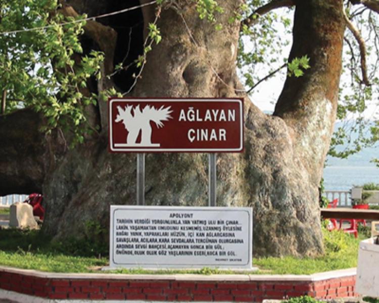 Ekoturizme Katkı Yönü İle Anıt Ağaçlar (13)