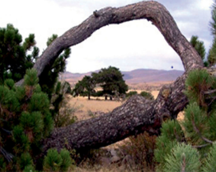 Folklorik ve Mistik Özelliğe Sahip Anıt Ormanlar (9)